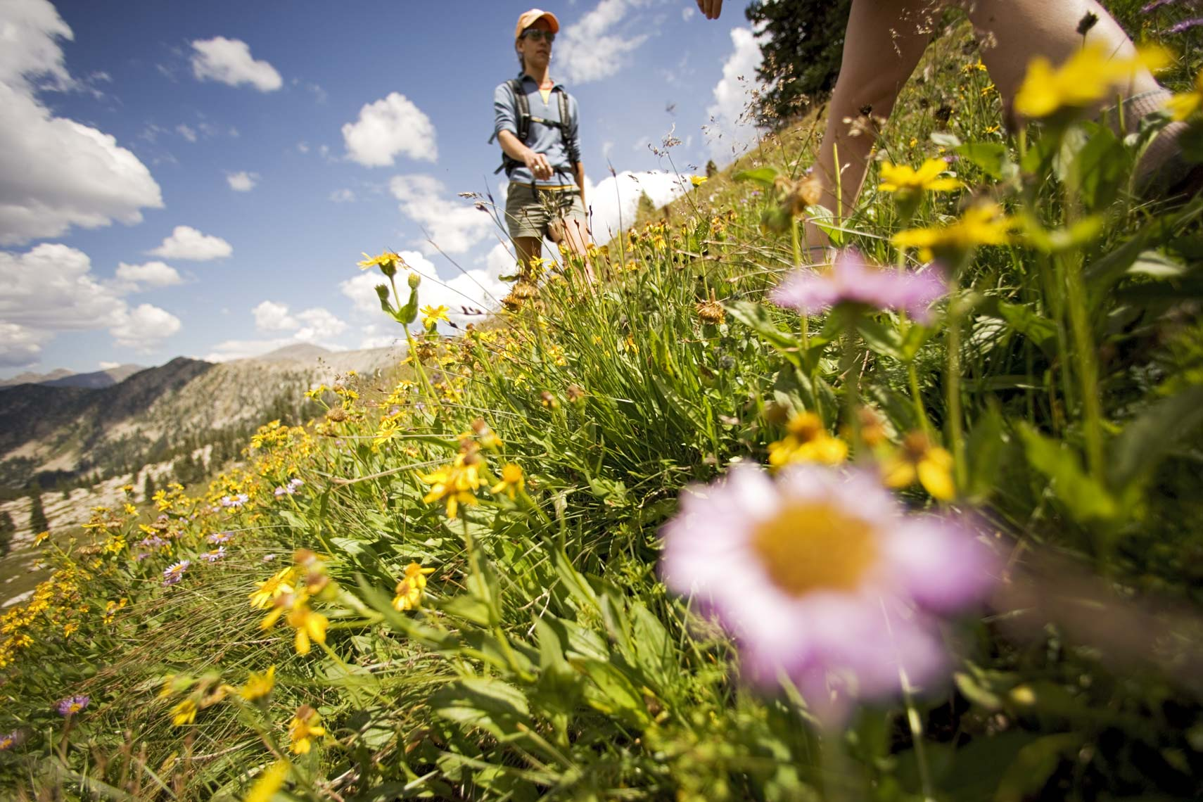 Tomas Zuccareno Photography | Hiking in the Wildflowers